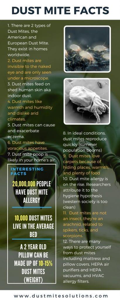 dust mite allergy facts