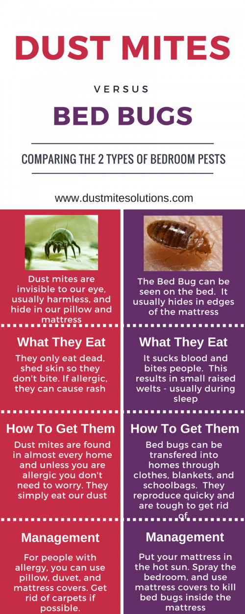Dust mite bites