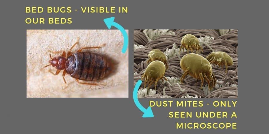 Dust mites bites - Bed bugs bites