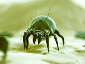 dust mite protection tips