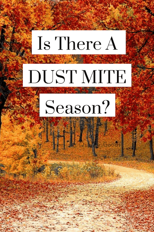 worst time of year for dust mite allergy