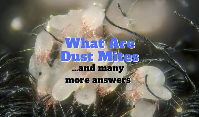 what are dust mites - 1