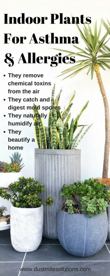 7 Best Indoor Plants For Asthma Allergy Sufferers And