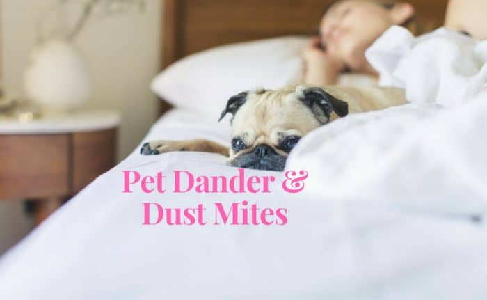 why are my allergies worse indoors - pet and dust
