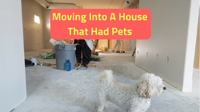 Moving into a house that had pets