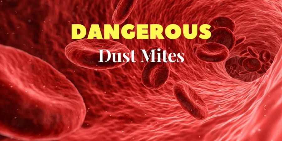 are dust mites dangerous to humans