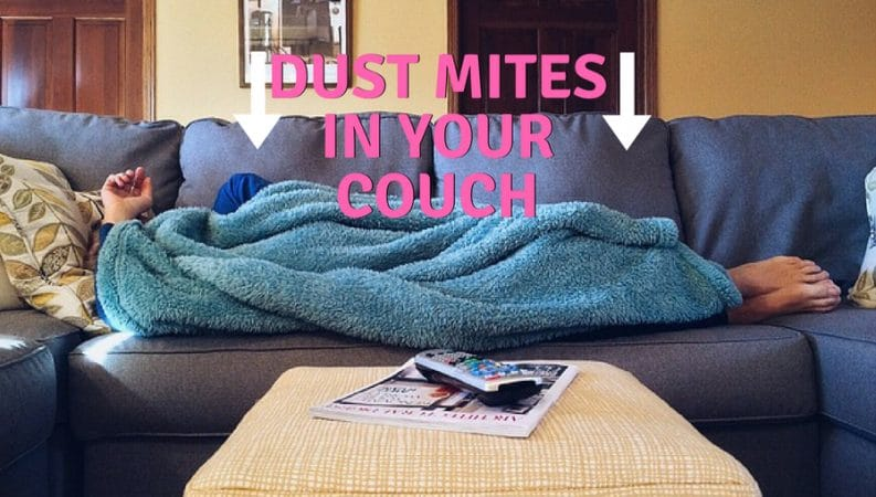 Super How To Get Rid Of Dust Mites In A Couch Dust Free Couch Pabps2019 Chair Design Images Pabps2019Com