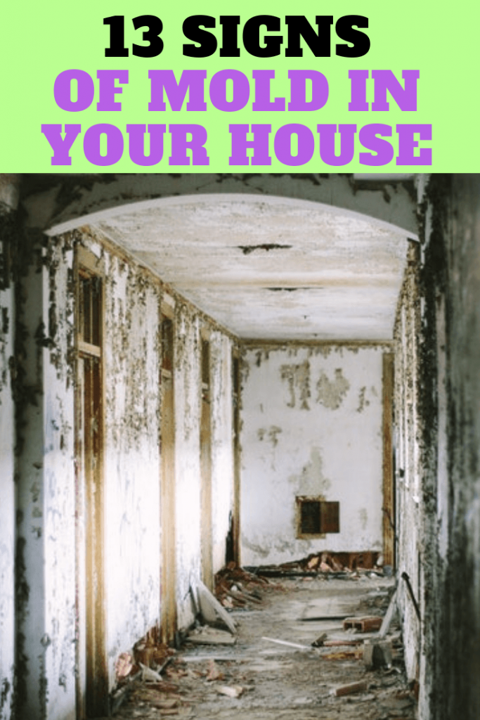 signs of mold in your house