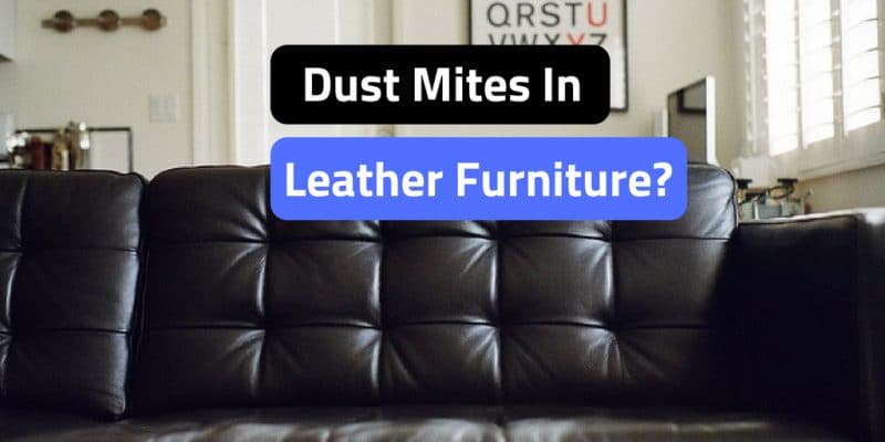 Strange Can Dust Mites Live In Leather Furniture Onthecornerstone Fun Painted Chair Ideas Images Onthecornerstoneorg