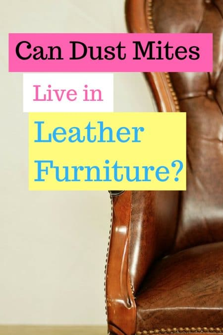Can dust mites live in leather furniture?