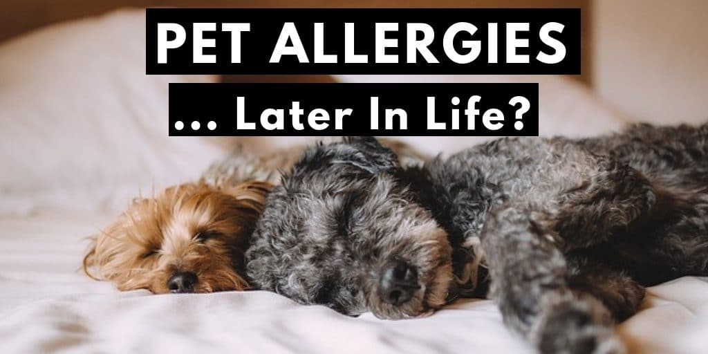 Can I develop pet allergies later in life