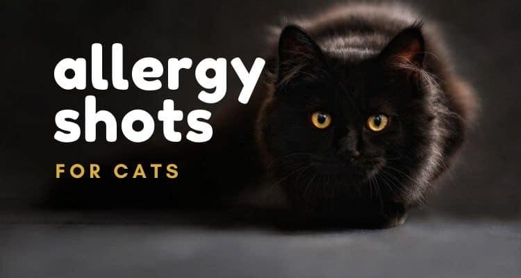 cat allergy shots